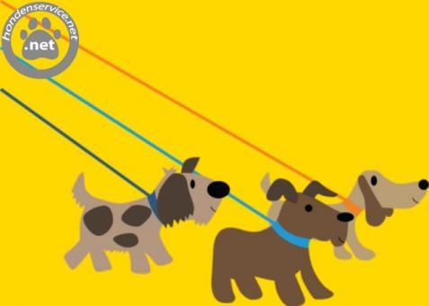 Zoek je een Professionele hondenuitlaatservice amstelveen