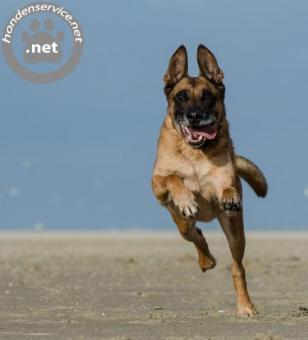 Vind hier je hondenuitlaatservice alphen aan den rijn