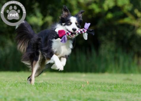 Betrouwbare hondenuitlaatservice emmen