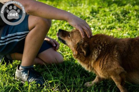 Vakkundig team hondenuitlaatservice deventer