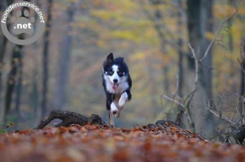 Budget hondenuitlaatservice zutphen