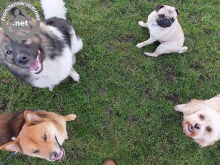 Goede en betrouwbare hondenuitlaatservice utrecht