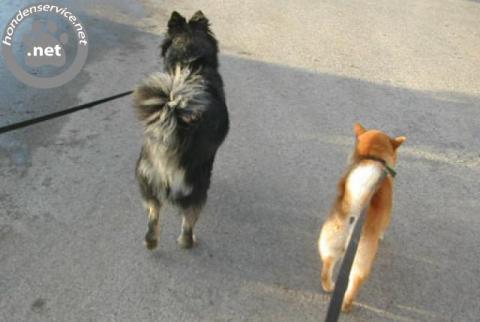 Enthousiaste hondenuitlaatservice roosendaal