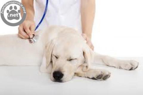 Gratis advies voor je hond bij dierenziekenhuis amsterdam