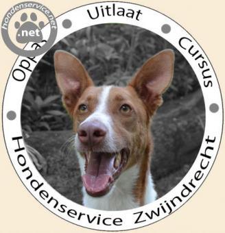 Hondenservice Zwijndrecht - kleinschalige uitlaat en oppas