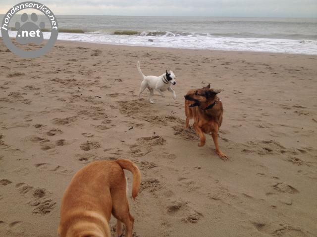 Honden Service