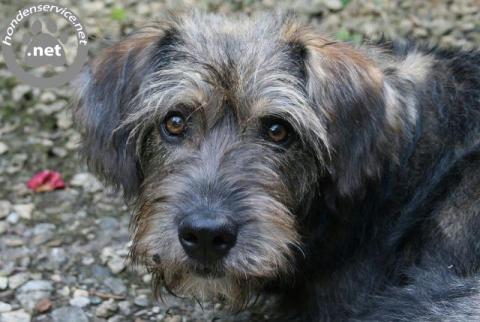 Honden -uitlaatservice en weekend oppas