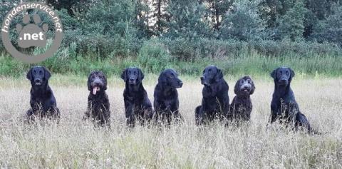 Hondenuitlaatservice Zwolle