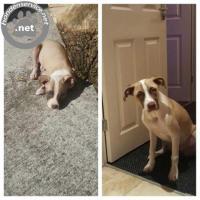 Super lieve hond 1 jaar