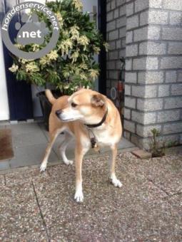 Hondenliefhebber gezocht