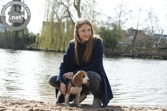 Hondenuitlaatservice en oppas