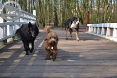 Honden uitlaatservice Amstelveen ter overname